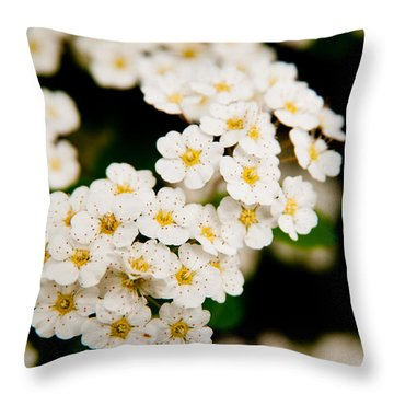 Bridal Veil Spirea Throw Pillow