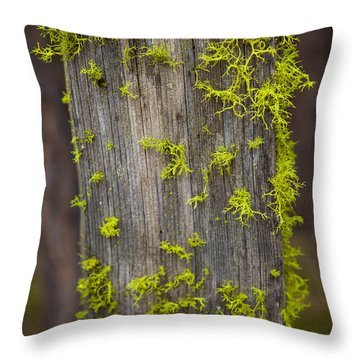 Bright Green Lace Throw Pillow by Omaste Witkowski