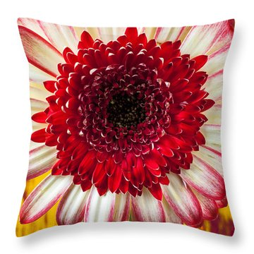 Bright Red And White Mum Throw Pillow by Garry Gay