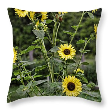 Bright Sunflowers Throw Pillow by Denise Romano