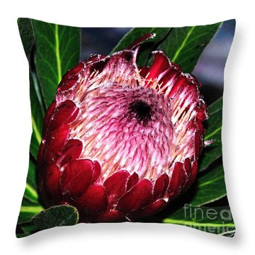 Bright'n'happy Protea Throw Pillow by Kaye Menner