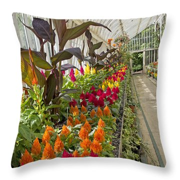 Brilliance Palm House Ireland Throw Pillow