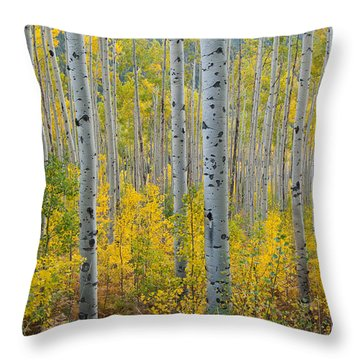 Brilliant Colors Of The Autumn Aspen Forest Throw Pillow