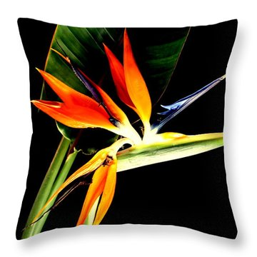 Throw Pillow featuring the photograph Brilliant by Diane Merkle