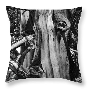 Throw Pillow featuring the photograph Bristle-cone Pine-2 by Mae Wertz