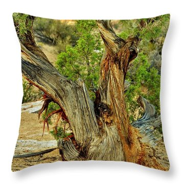 Bristlecone 1 Throw Pillow by Marty Koch
