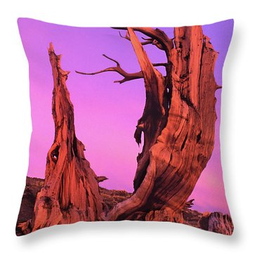 Throw Pillow featuring the photograph Bristlecone Pine At Sunset White Mountains Californa by Dave Welling