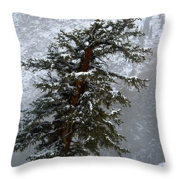 Bristlecone Pine In Snow Throw Pillow