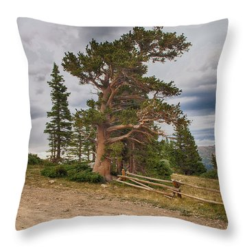 Bristlecone Pines Throw Pillow