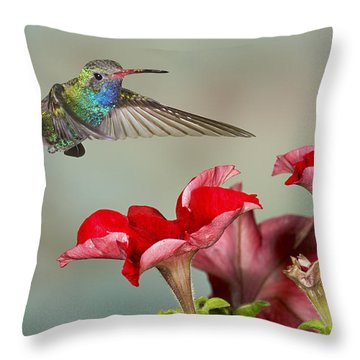 Broad Billed Hummingbird 4 Throw Pillow