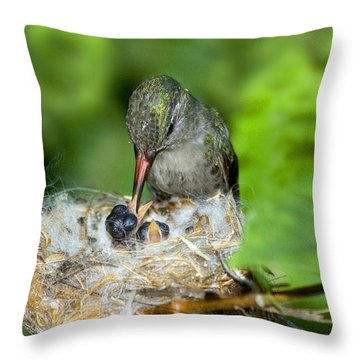 Broad-billed Hummingbird And Young Throw Pillow by Anthony Mercieca