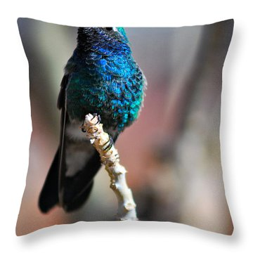 Throw Pillow featuring the photograph Broad-billed Hummingbird by Barbara Manis