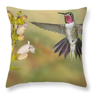 Broad Tailed Hummingbird 2 Throw Pillow