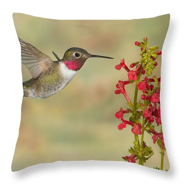 Broad-tailed Hummingbird 5 Throw Pillow