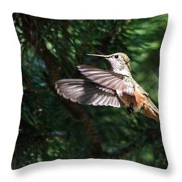 Broad-tailed Hummingbird Throw Pillow