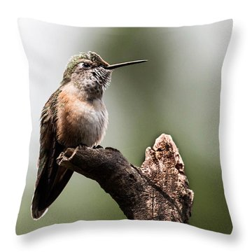 Broad-tailed Hummingbird Sit  Throw Pillow