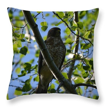 Throw Pillow featuring the photograph Broad-winged Hawk by James Petersen