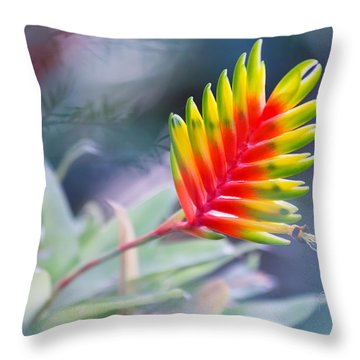 Bromeliad Beauty Throw Pillow by Eti Reid