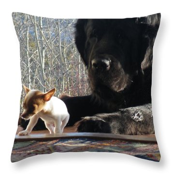 Throw Pillow featuring the photograph Brothers In Claws by Brian Boyle