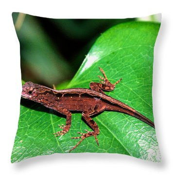 Brown Anole Throw Pillow