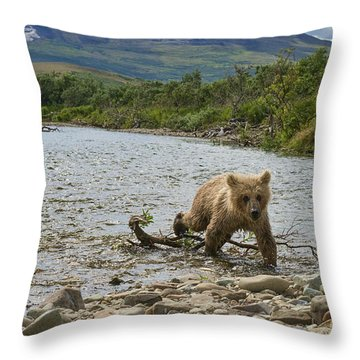 Brown Bear Cub Walking Up Stream Trying Keep Up With Mom Throw Pillow by Dan Friend