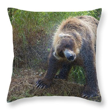 Brown Bear Shaking Water Off After An Unsucessful Salmon Dive Throw Pillow by Dan Friend