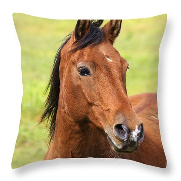 Brown Beauty Throw Pillow