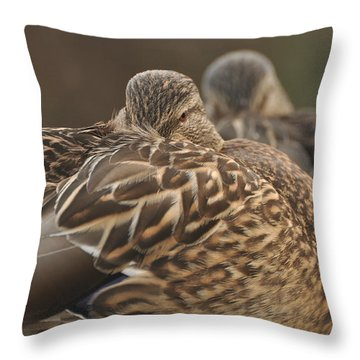 Throw Pillow featuring the photograph Brown Beauty  by Sabine Edrissi