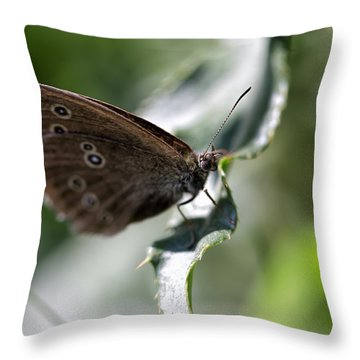 Throw Pillow featuring the photograph Brown Butterfly On Leaf by Leif Sohlman