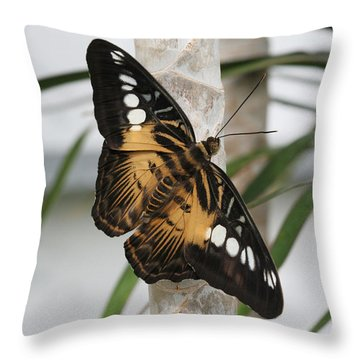 Brown Clipper Butterfly #2 Throw Pillow by Judy Whitton