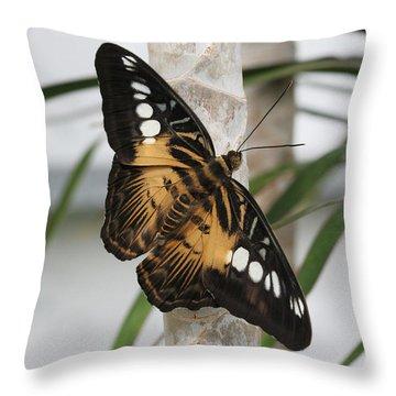 Brown Clipper Butterfly #2 Throw Pillow