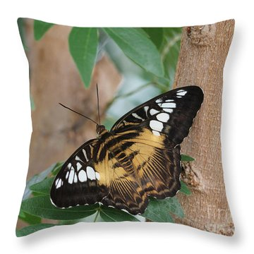 Throw Pillow featuring the photograph Brown Clipper Butterfly #5 by Judy Whitton