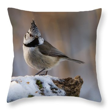 Brown Eyed Girl Throw Pillow by Torbjorn Swenelius