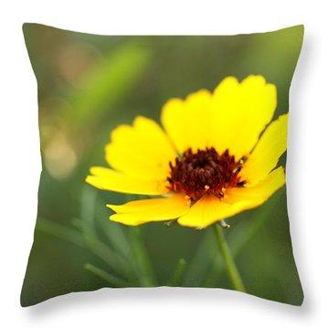 Brown Eyed Susan Throw Pillow