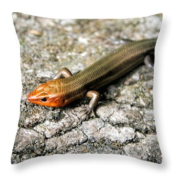 Brown Headed Skink Throw Pillow