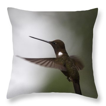 Brown Inca Hummingbird Throw Pillow