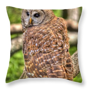 Throw Pillow featuring the photograph Brown Owl by Donald Williams