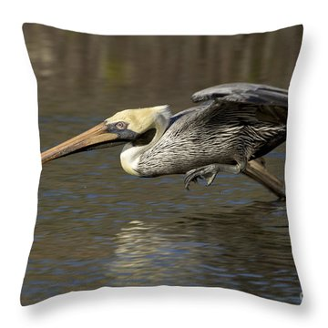 Throw Pillow featuring the photograph Brown Pelican Fishing Photo by Meg Rousher