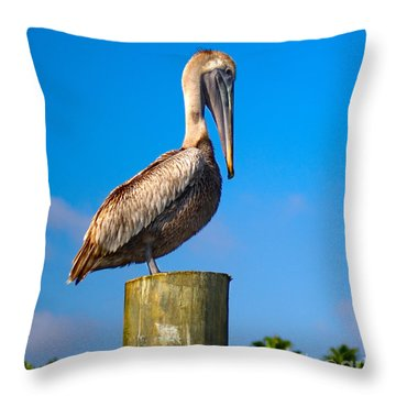 Brown Pelican - Pelecanus Occidentalis Throw Pillow by Carsten Reisinger