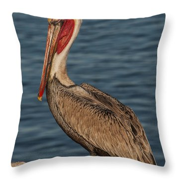 Brown Pelican Portrait 2 Throw Pillow