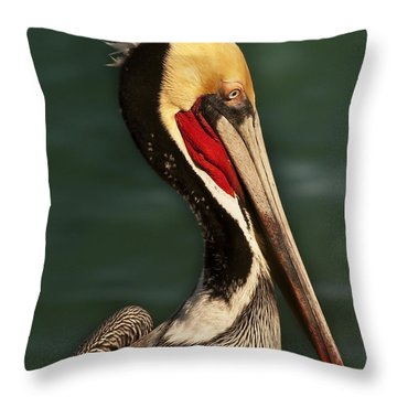 Brown Pelican Portrait Throw Pillow