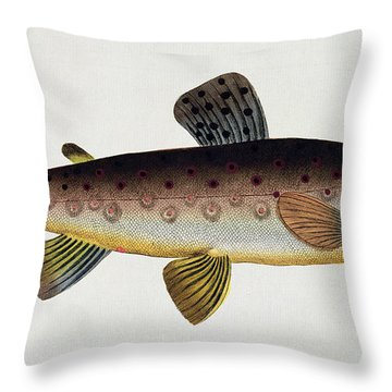 Brown Trout Throw Pillow by Andreas Ludwig Kruger