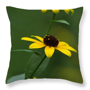 Browneyed Susan Throw Pillow