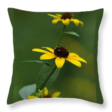 Browneyed Susan Throw Pillow by Daniel Reed