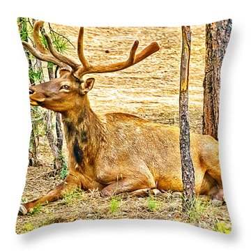 Browsing Elk In The Grand Canyon Throw Pillow by Bob and Nadine Johnston