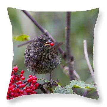 Brunch Throw Pillow by Doug Lloyd