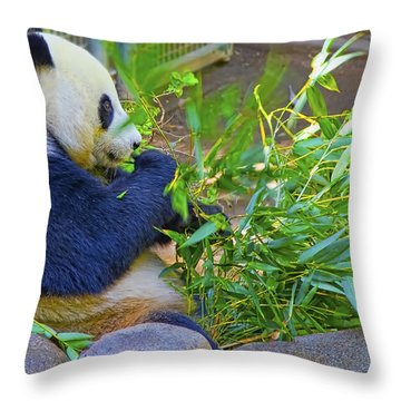 Throw Pillow featuring the photograph Brunch On The Patio by Gary Holmes