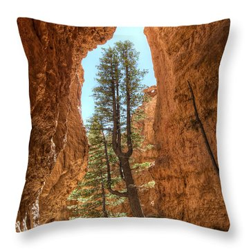 Throw Pillow featuring the photograph Bryce Canyon Trees by Tammy Wetzel