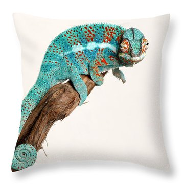 B.summers Panther Chameleon Throw Pillow