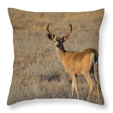 Buck 4 Throw Pillow
